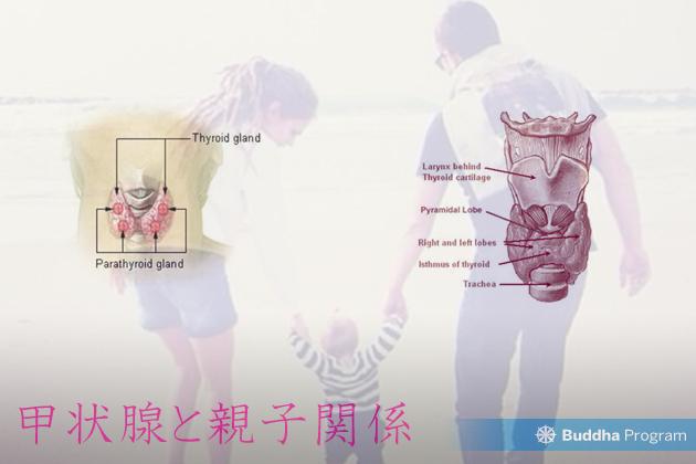 甲状腺と親子関係性